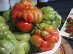 Big Brutes of Italian Costoluto Genovese tomatoes